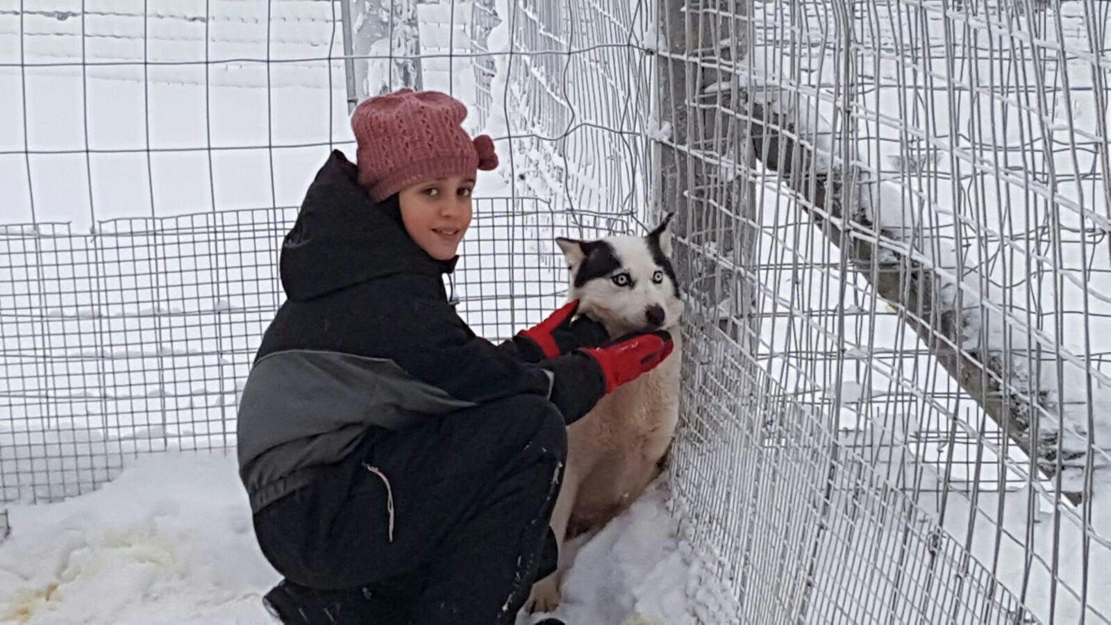 Helena acariciando un precioso Husky siberiano en Rovaniemi, Laponia.