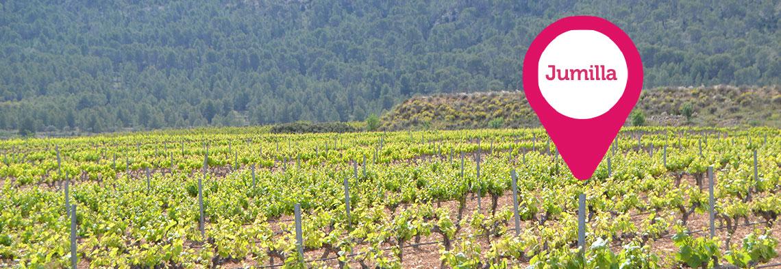 Jumilla por ruta del vino