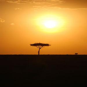 À descoberta de Àfrica