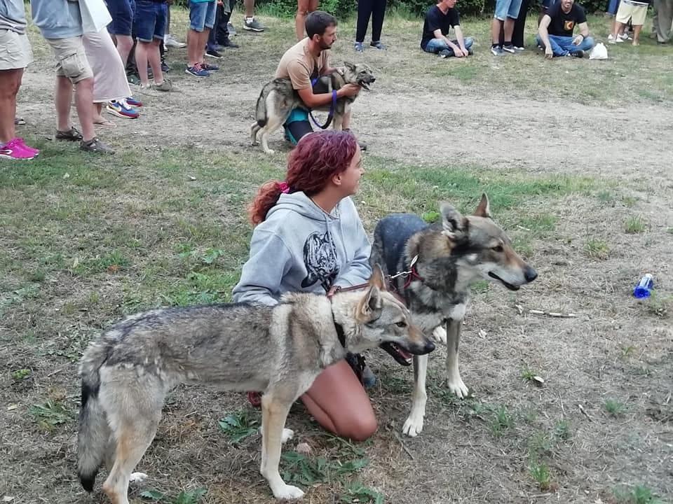 Paseo con Lobos