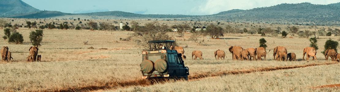 ¡Volvemos de Safari! Especial selección Kenia & Tanzania