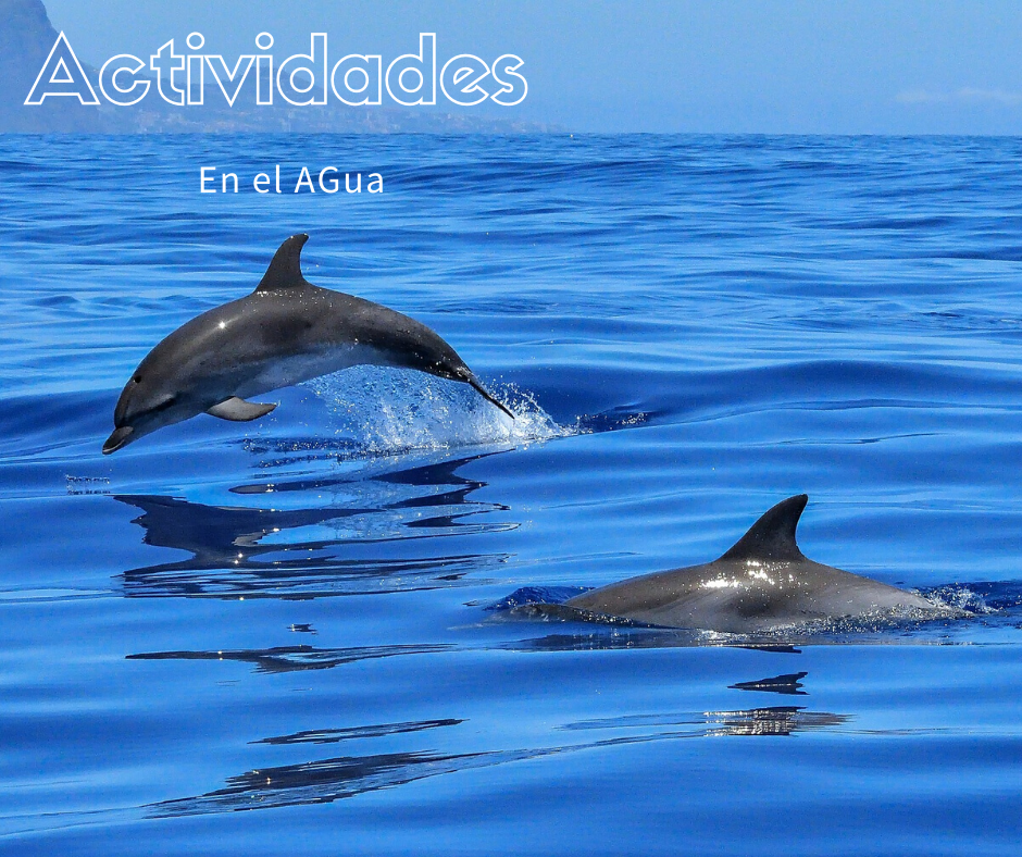 Actividades  en el Mar de Madeira