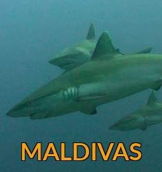 Viajes buceo Maldivas