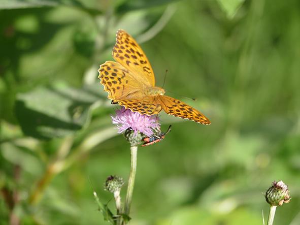 Mariposa en barranco de las Umbrías
