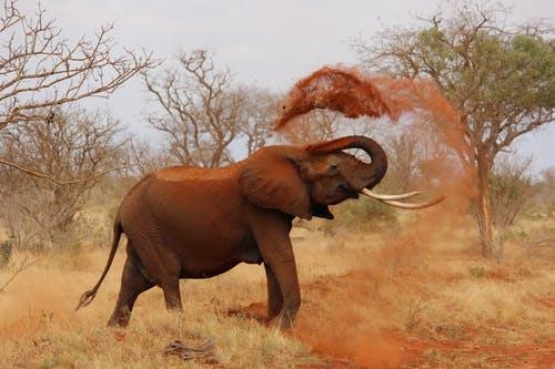 Viajes Africa Safaris Y Circuitos